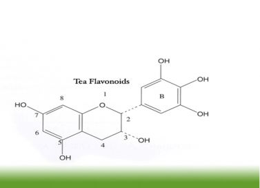 images-stories-New pic-flavonoids-377x272
